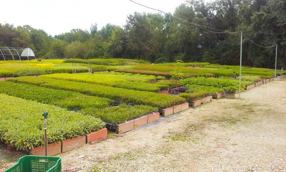 Visita a vivers Carex