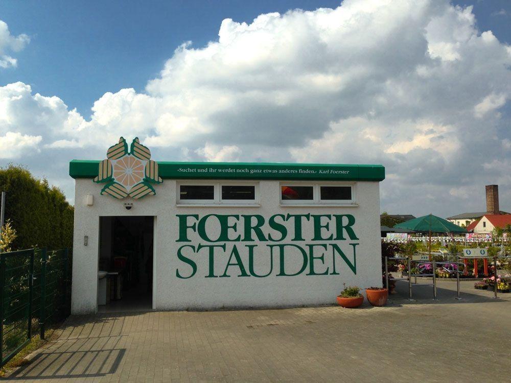 Karl Foerster