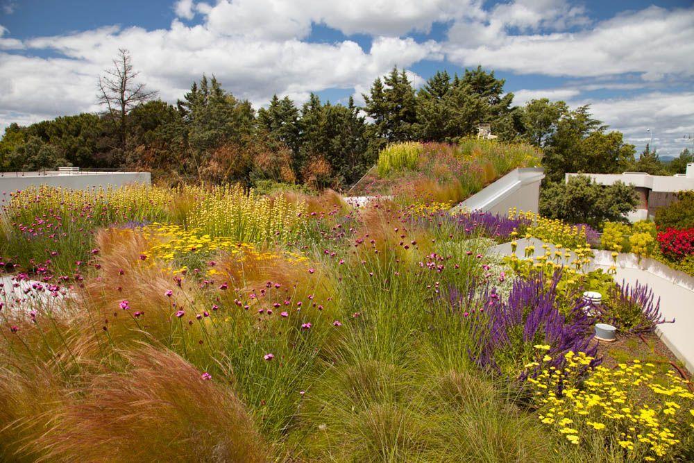 Arañazos en el cielo- La buena salud de los jardines naturalistas en España