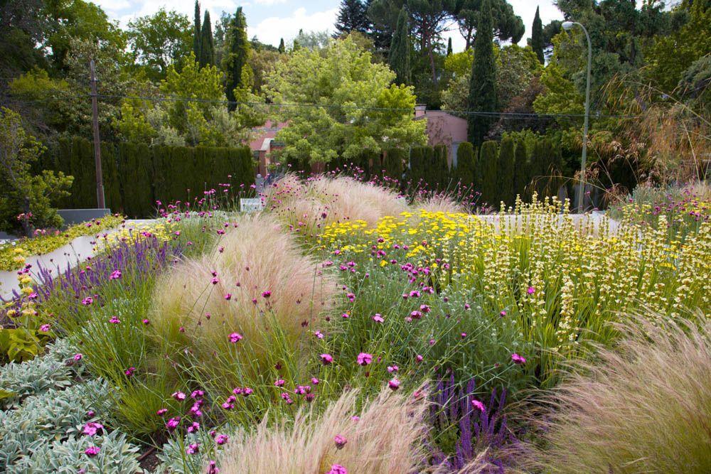 planta paisajistas cubierta vegetal en madrid