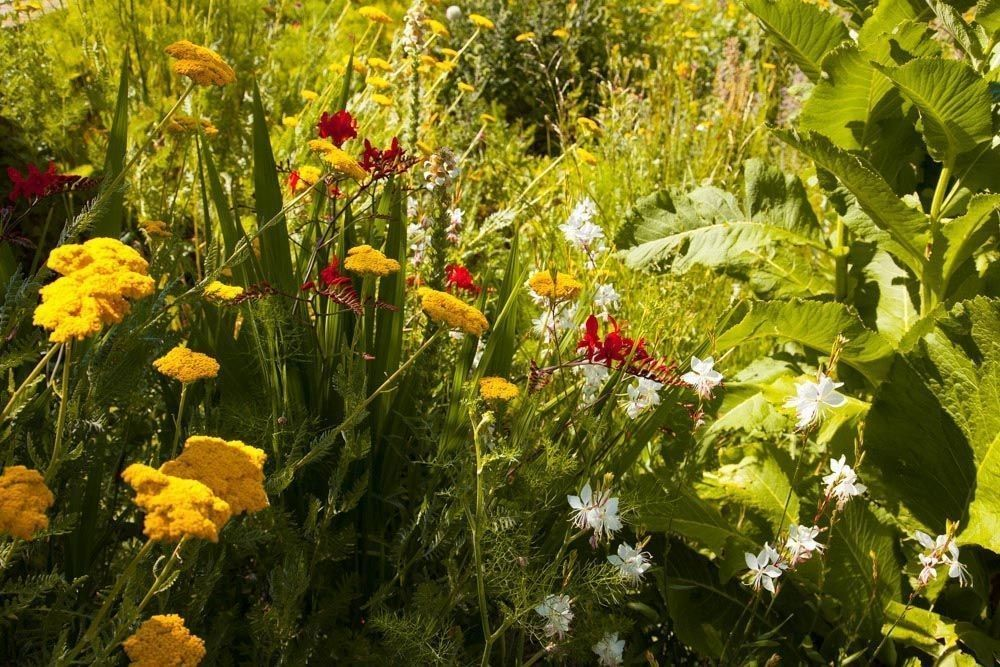 Planta_Paisajistas_Tenzuela14-24-1000x667