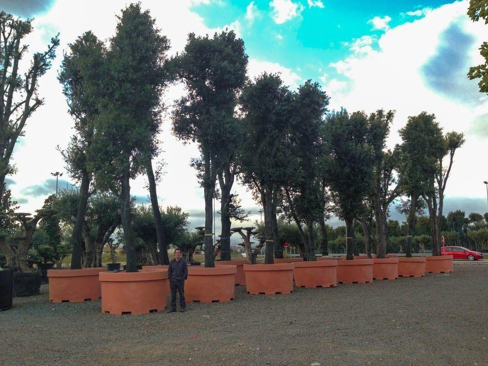 Visita Vivers Massaneda y centro de jardinería Sils
