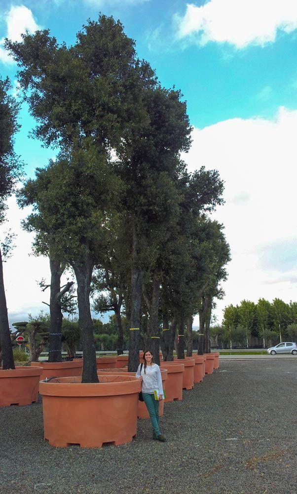 Visita vivers massaneda y centro de jardiner a sils planta paisajistas - Centro de jardineria madrid ...