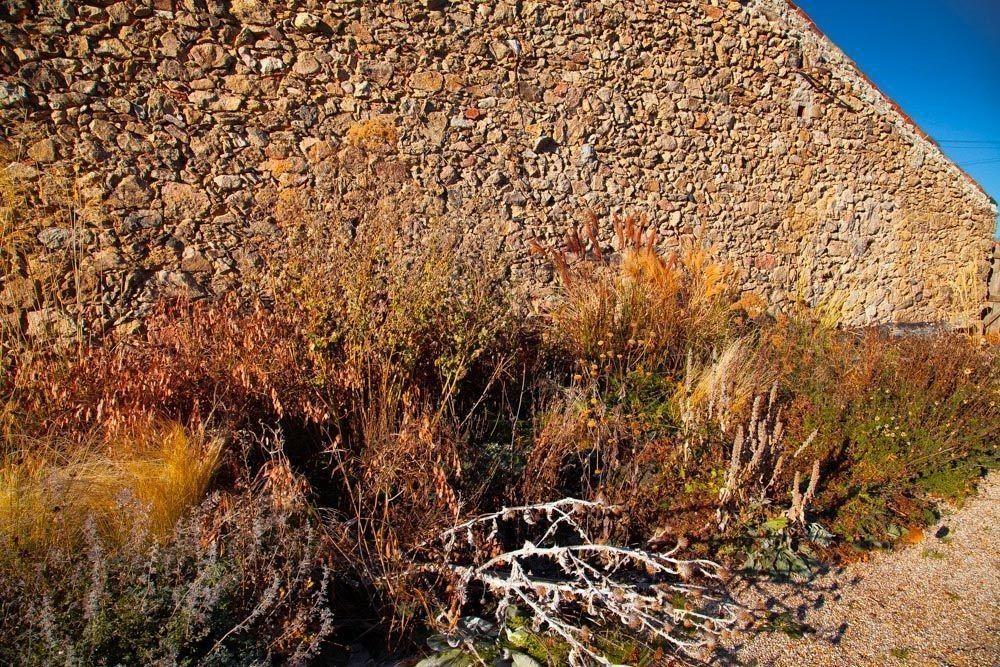 Planta_Paisajistas_Tenzuela13_Invierno-17-1000x667