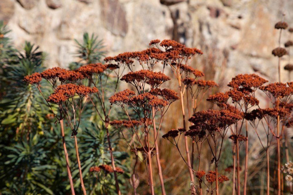 Planta_Paisajistas_Tenzuela13_Invierno-19-1000x667