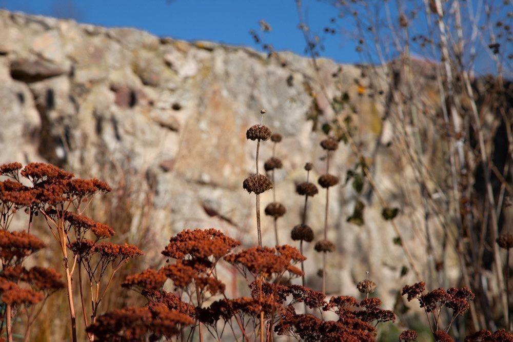 Planta_Paisajistas_Tenzuela13_Invierno-20-1000x667