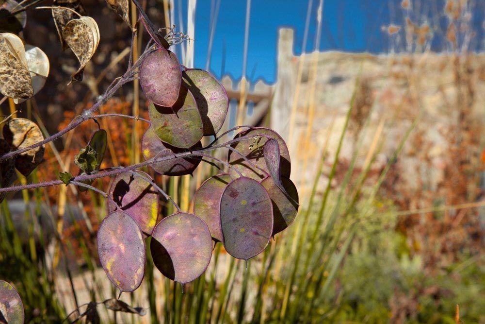Planta_Paisajistas_Tenzuela13_Invierno-21-1000x667