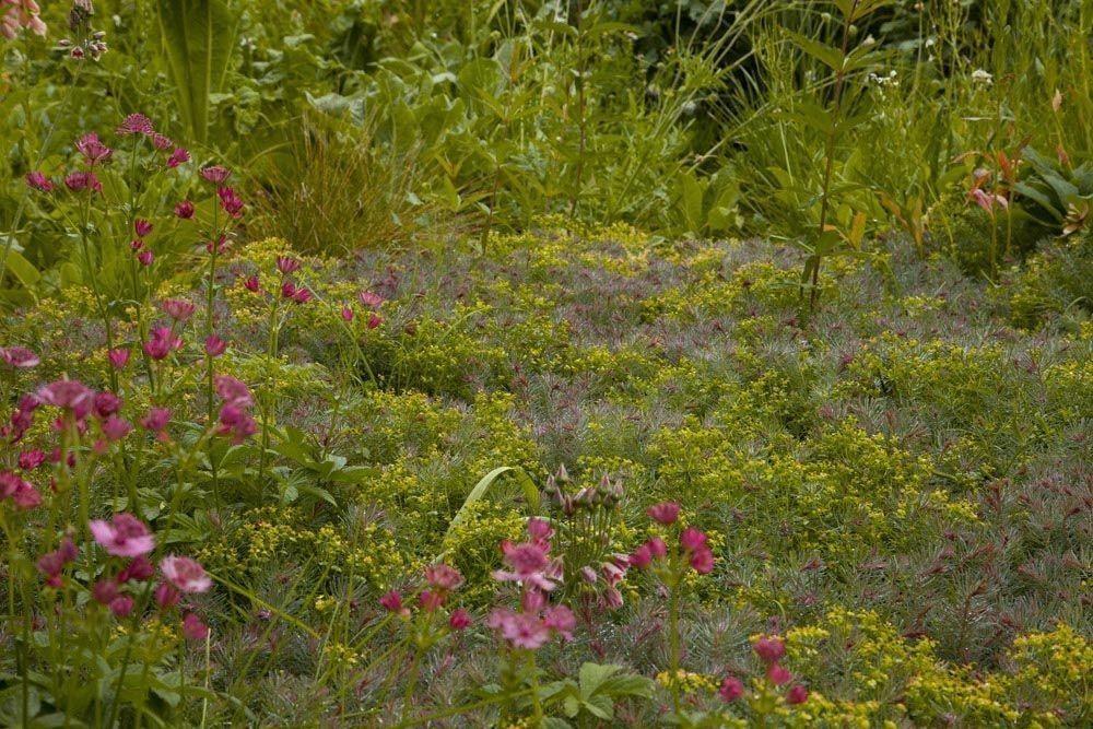 Planta_Paisajistas_Tenzuela14-22-1000x667