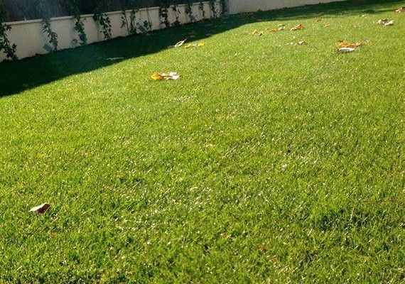 planta-paisajistas-jardin-privado-madrid-destac-570x400