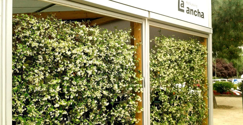 planta-paisajistas-la-ancha-terraza-lateral-detalle2