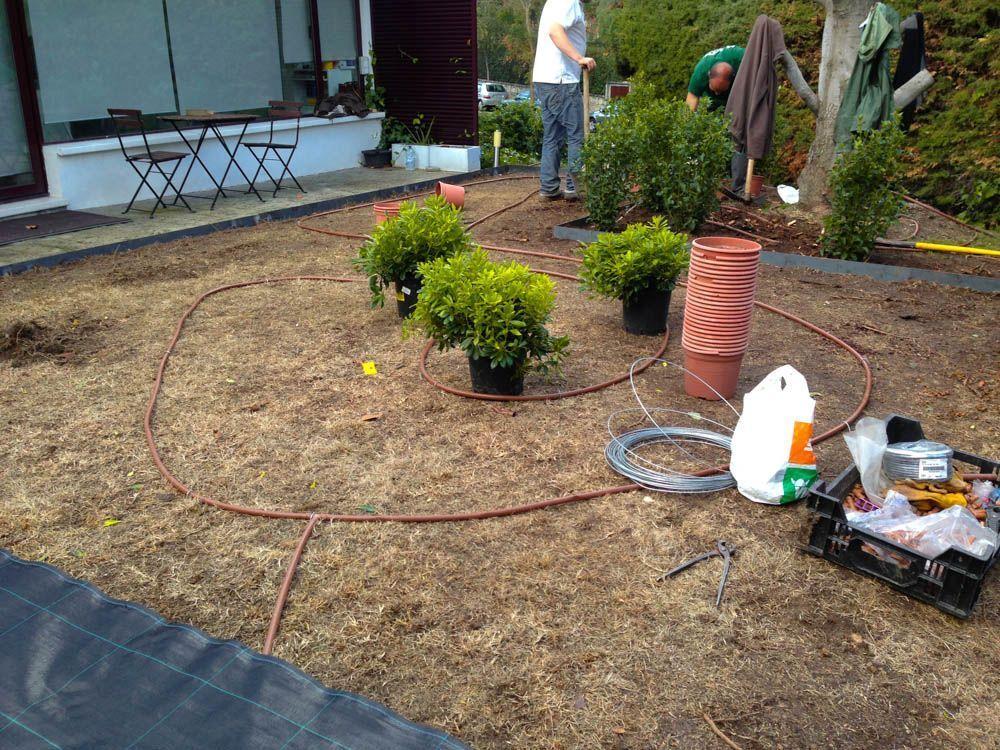 planta paisajistas cesped gravilla obras